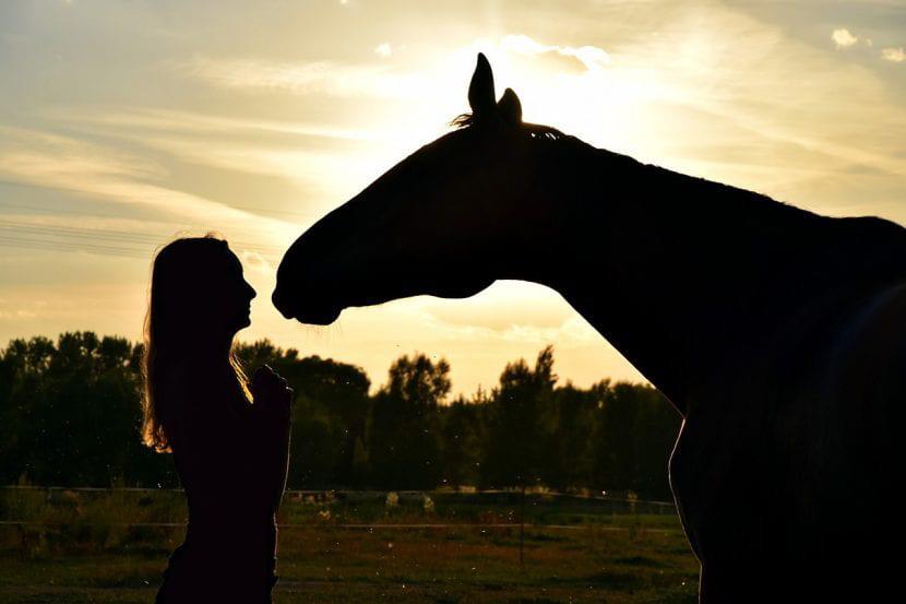 aprende a domar caballos