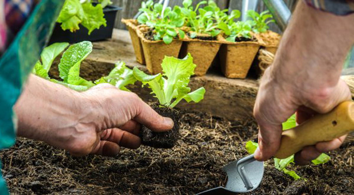 aprender a cultivar